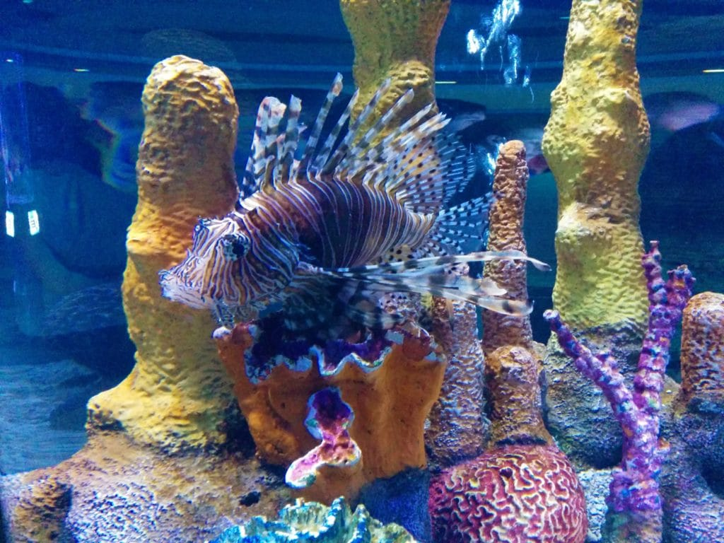 Seabase Aquarium at Epcot